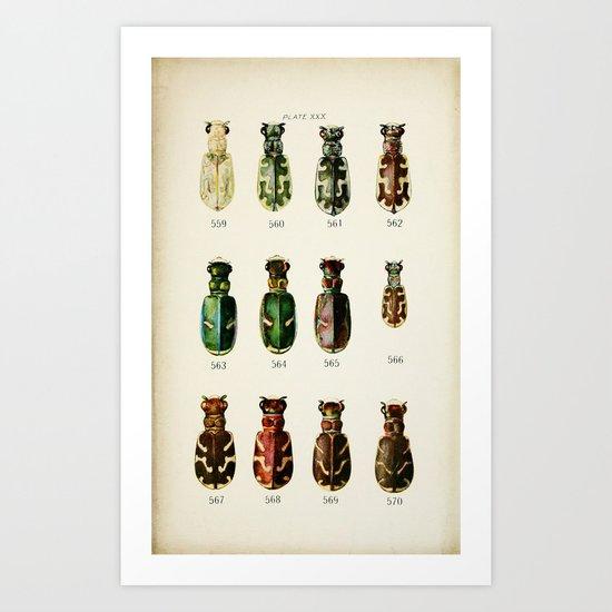 Ornate Beetles  Art Print