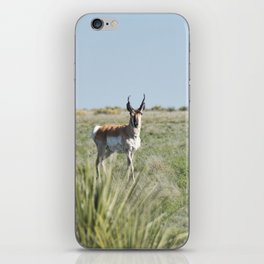 Pronghorn Antelope iPhone Skin