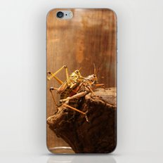 Insects Mate iPhone & iPod Skin