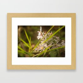 Floral Swish Framed Art Print