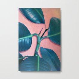 Ficus elastica Metal Print