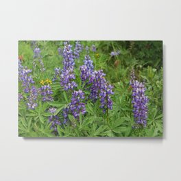 Purple Lupines - Wildflowers Metal Print