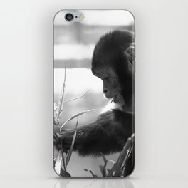 Wildlife Collection: Capuchin Monkey iPhone Skin