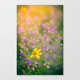 Colored Morning Canvas Print