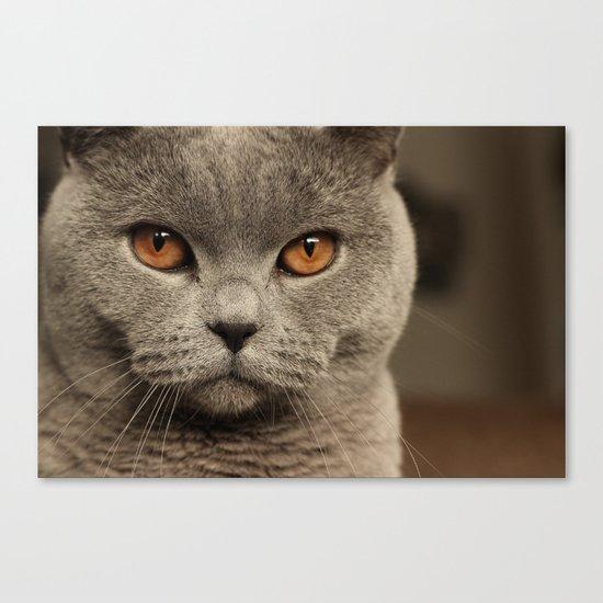 Diesel, the cat - (close up)  Canvas Print