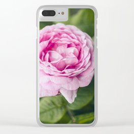 Soft pink tea rose flower Clear iPhone Case