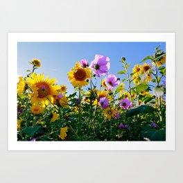 Breezy Sunflower Cosmos Day Art Print