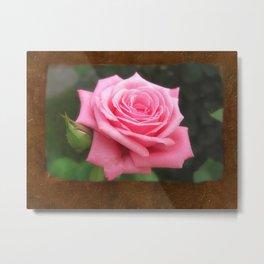 Pink Roses in Anzures 4 Blank P3F0 Metal Print