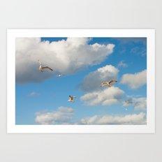 Greedy Gulls Art Print