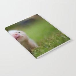 Little Pig Notebook