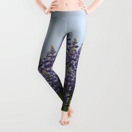 Lupine Flowers Photography Print Leggings