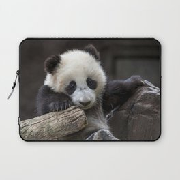 Baby panda climb a tree Laptop Sleeve