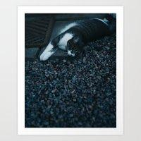 Cat stretching after dusk Art Print