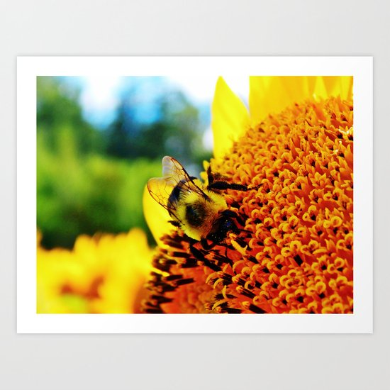Feasting Bee Art Print