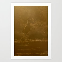Kangaroo silhouette Art Print