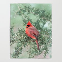 Christmas Bird (Northern Cardinal) Poster
