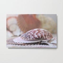 Seashell Collection Still Life Photograph Metal Print