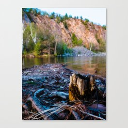 Tree Stump at Bon Echo Canvas Print
