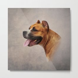 American Staffordshire Terrier 6 Metal Print