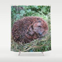 Erinaceidae,small hedgehog, wild living, sleeping in the grass Shower Curtain