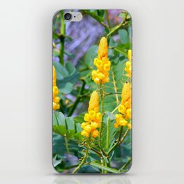 Popcorn Cassia iPhone Skin