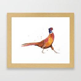 Pheasant Strut Framed Art Print
