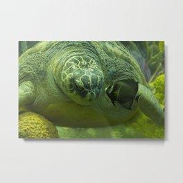 Big Turtle and Small Fish Kiss Metal Print