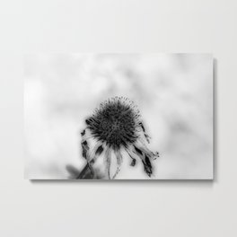 who knows where the time goes? Metal Print