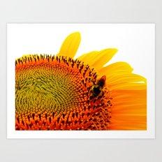Bee Feasting on Sunflower Art Print