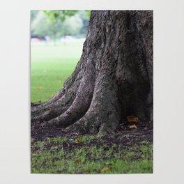 Cambridge tree 3 Poster