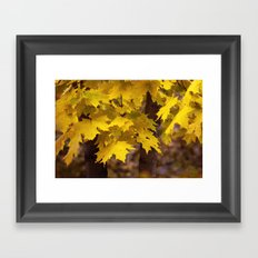 Autumn leaves 7258 Framed Art Print