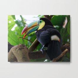 Toucan bird Metal Print