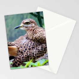 Spotted Dikkop Stationery Cards
