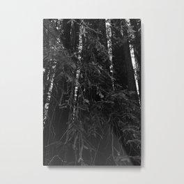 Redwood Forest VI Metal Print