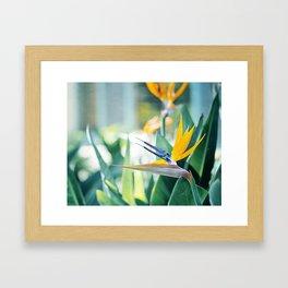 Bird of Paradise Photography, Green Orange Aqua Blue, Tropical Flower Nature Botanical Framed Art Print