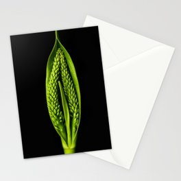 Hebe speciose seed capsule Stationery Cards