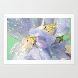 Delphinium Flower with Raindrops 3 Art Print