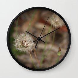 Dandelion growing wild Wall Clock