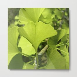 green ginkgo leaf VII Metal Print