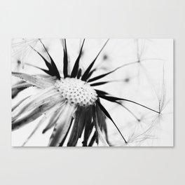 Dandelion BW Canvas Print