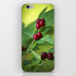Red Honeysuckle Berries iPhone Skin