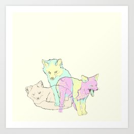 3 Channel Island Foxes Art Print