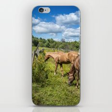 Out to pasture iPhone & iPod Skin