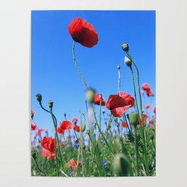 poppy flower no17 Poster