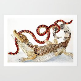 Spectacled Caiman and a False Coral Snake by Maria Sibylla Merian c.1705-10 // Wild Animals Decor Art Print