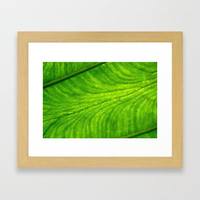 Leaf Paths Framed Art Print