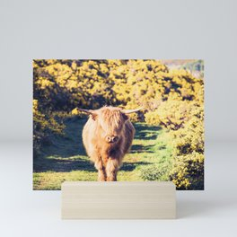 Lovely Scotland Highland Cow (Scottish Highland Cattle) is walking in the sun Mini Art Print