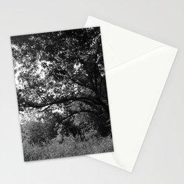 Ozark Forest Stationery Cards