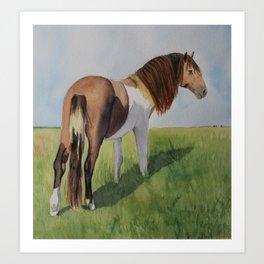 Wild horse at Assateague Island Art Print