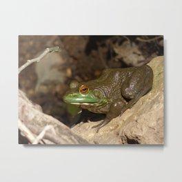 bullfrog II Metal Print